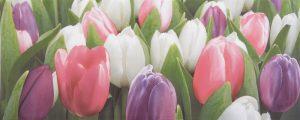 Tulip Mini PN